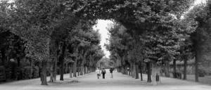 Garten black and white photograph by Ernesto Santalla